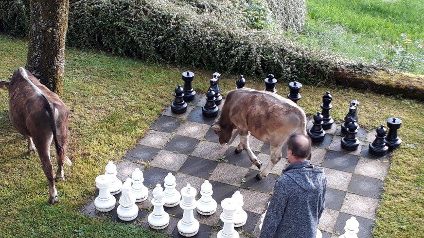Haus Brannenburg Kuh Schach Freizeit